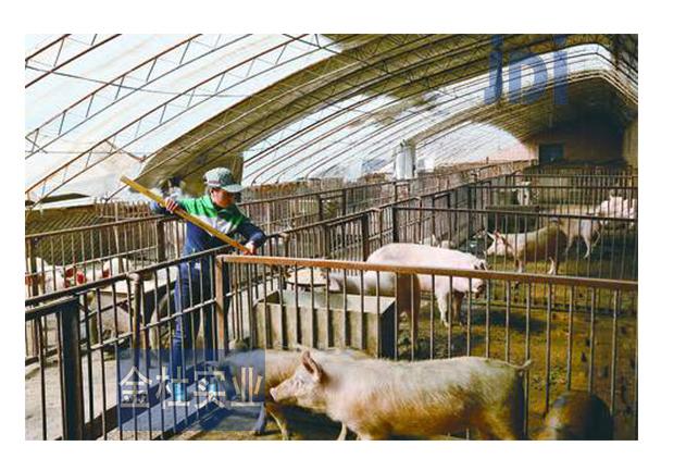 FRP采光瓦在养猪场应用图